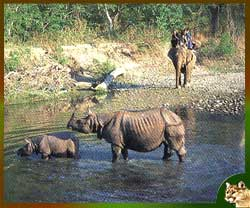 Kaziranga National Park is the oldest in Assam and lies partly in Nagaon District and partly in Golaghat District of Assam.